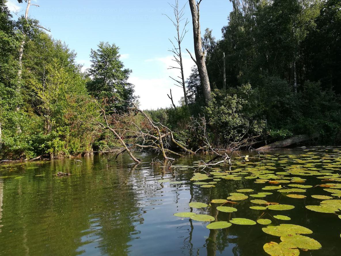 Fragment rzeki na pojezierzu Brodnickim